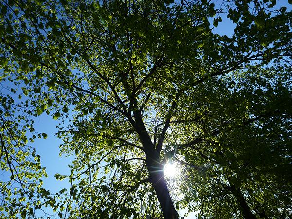 Träd i stan